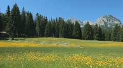 Sunny meadow with yellow flowers, pine trees, rocky mountain in the background Stock Footage