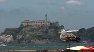 Speed Boat, Alcatraz and Bird in San Francisco HD Stock Footage