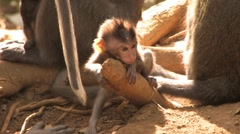 Cute Little Monkey Baby Sitting Next to Loving Primate Mother Stock Footage