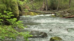 Lewis River 12 Stock Footage