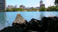 Puerto Rico - Barnacles on Rocks in Condado Lagoon - stock footage