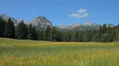 Meadow with flowers, surrounding pine trees and rocky mountains on a sunny day Stock Footage