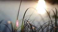 Stock Video Footage of lake sunset grass
