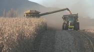 Stock Video Footage of corn harvesting