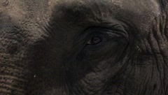 Closeup Of An Elephant Eye Stock Footage