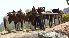 Cowboy hitching horses Stock Footage