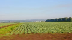 Farm field with cabbage Stock Footage