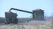 Corn into trailer rear view Stock Footage