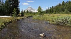 Alpine stream Stock Footage