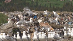 Garbage on the Wing 2 Stock Footage