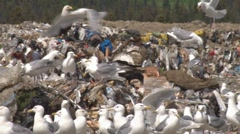 Garbage on the Wing 1 Stock Footage