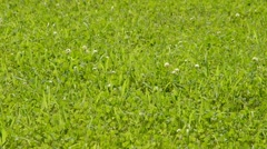Green grass background texture straight Stock Footage