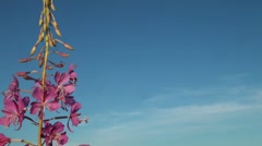 Purple flower in the sky Stock Footage
