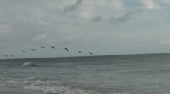 OBX-14(pelicans) Stock Footage