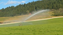 Agriculture, irrigation sprinklers and hay field, medium shot Stock Footage