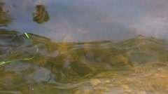 Scenic Pond 03 - stock footage