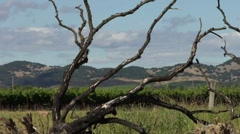 Tree and Grape Fields in Napa Valley Time Lapse Stock Footage