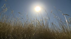 Hayfield, sun in background, wide - stock footage