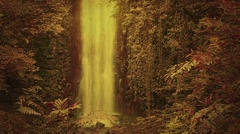 Enchanted forest with waterfall Stock Footage