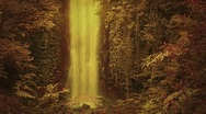 Stock Video Footage of Enchanted forest with waterfall