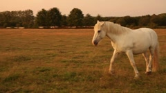 Horse at sunset Stock Footage