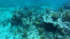 Black Grouper Camouflage Stock Footage