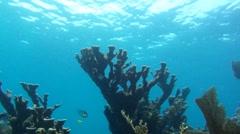 Hawaii: Underwater Stock Footage