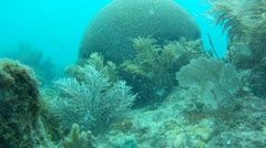 Coral Head Underwater Stock Footage