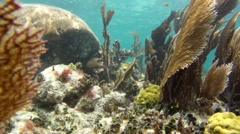 Tropical Coral Reef - stock footage