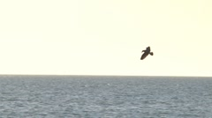 Sea bird dives in slow motion Stock Footage