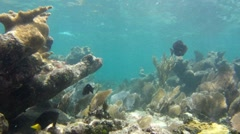 Coral Reef 10 Stock Footage