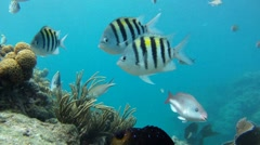 Coral Reef: With Lots of Fish 1 - stock footage