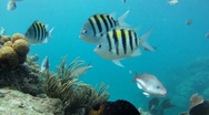 Stock Video Footage of Coral Reef: With Lots of Fish 1