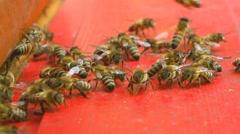 Bees at beeyard Stock Footage