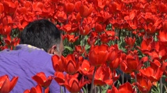 Photographer in tulip fields Stock Footage