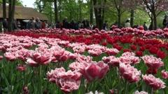 Tourists in Dutch Keukenhof Stock Footage