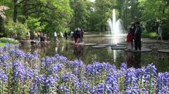 Tourists in Dutch flower garden Stock Footage