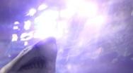 Sharks6 1 Stock Footage