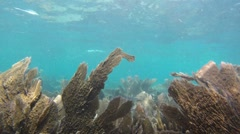 Reef: A long continuous shot. - stock footage