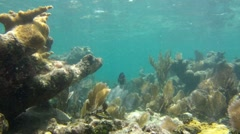 Coral Reef: Extended Still Shot Stock Footage