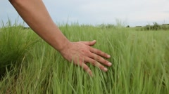 Man's hand touching grass walking through the field Stock Footage