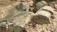 Petrified tree trunks Stock Footage