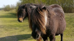 Long-haired Ponies 1 Stock Footage