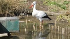 Stork - stock footage