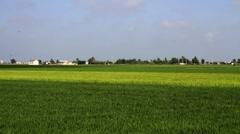 Landscape at Delta del Ebro, Spain Stock Footage