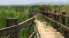 Wooden path with reeds on the sides Stock Footage