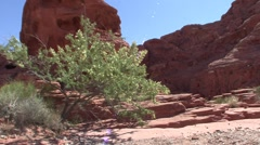 P01465 Desert Shrub and Rock Formations Stock Footage