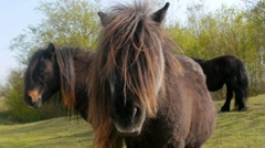 Long-haired Ponies 2 Stock Footage