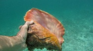 Stock Video Footage of Bahamas: Swimming With Conch Shell