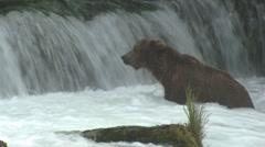 P01506 Brown Bear at Waterfall at Brooks Falls - stock footage